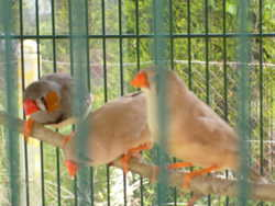 Les Petits Mandarins, autres