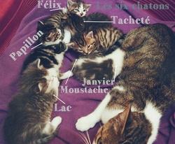 Les Six Chatons Et Leur Mère, chat