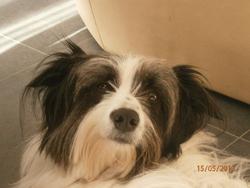 Leslie, chien Border Collie