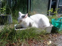 Levis, chat Gouttière