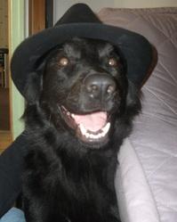 Léwo, chien Border Collie