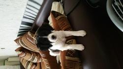 Lexie, chien
