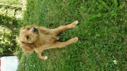 Lexy, chien