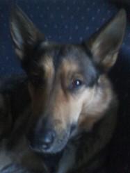 Leyla, chien