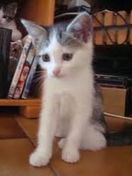 Lhelbie, chat Gouttière