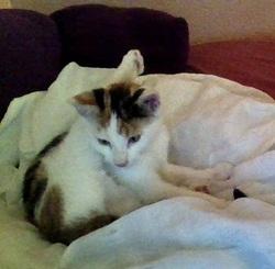 Li'Ella, chat Gouttière