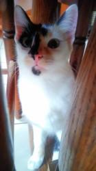 Lia, chaton