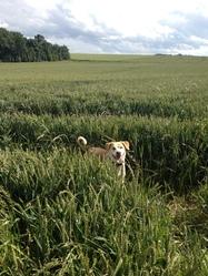 Lya, chien