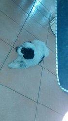 Liam, chien