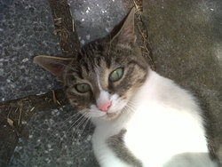 Libellule, chat Gouttière