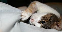 Libellule Dit Lili, chat Gouttière