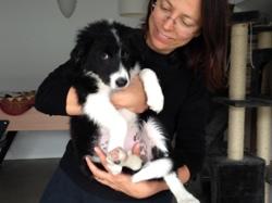 Lila, chien Border Collie