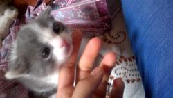 Lila, chat