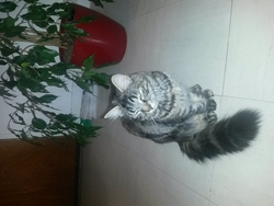 Lilas, chat