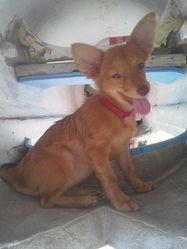 Lilas, chien