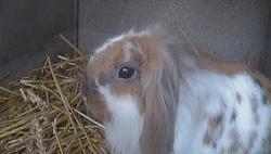 Lili, rongeur Lapin