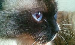 Lili Maintenant Au Paradis, chat