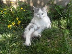 Lili, chat