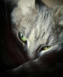 Lili, chat Gouttière