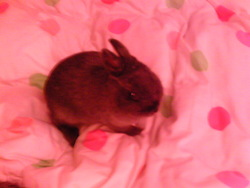 Lilie, rongeur Lapin