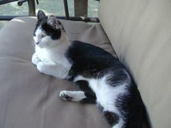 Lillou, chat Gouttière