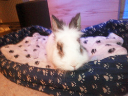 Lilo, rongeur Lapin