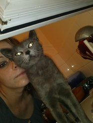 Lilo, chat Chartreux