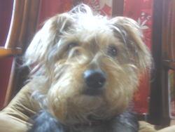 Lilo, chien