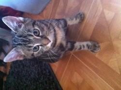 Lilo , chat