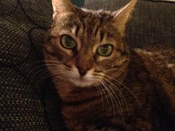 Liloo, chat Gouttière