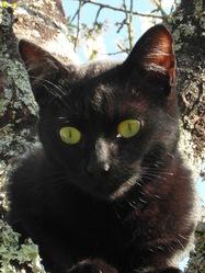 Lilou - Moon, chat Gouttière