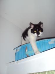 Lilou, chat