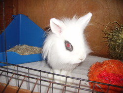 Lilou, rongeur Lapin