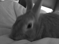 Lilou, rongeur Lapin
