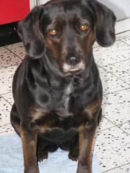 Lilou, chien