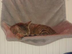Lilou, chat Gouttière