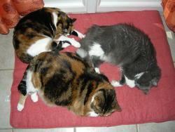 Lilou, Samba, Fripounet, chat Gouttière