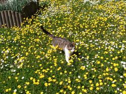 Liloubidette, chat Gouttière
