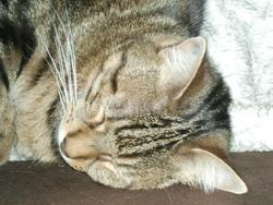 Lily, chat Gouttière