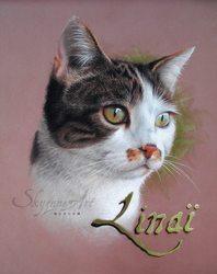 Linai, chat