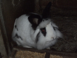 Lionel, rongeur Lapin