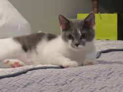 Lionna, chat Gouttière