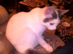 Liroy, chat Gouttière