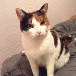 Lisa, chat Gouttière
