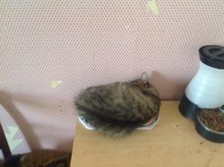 Lita, chat Gouttière