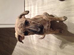 Litchi, chien