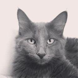 Little-Monster Jr, chat Gouttière