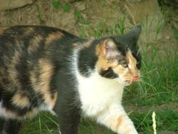 Lizzie, chat Gouttière