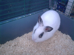 Lizzie, rongeur Lapin