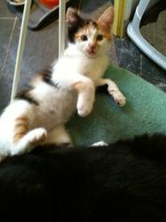 Lizzy, chat Gouttière